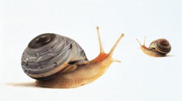 lumaca elicina