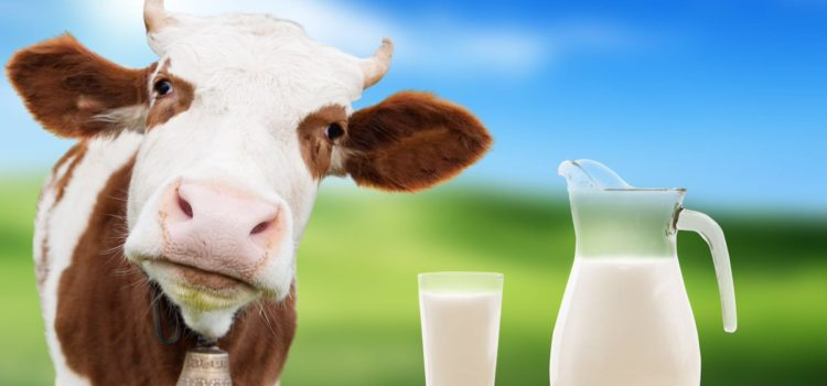 Differenza tra latte pastorizzato, sterilizzato, UHT, di ...