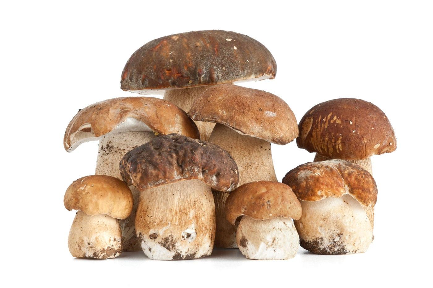 ricetta dieta di funghi grigliati