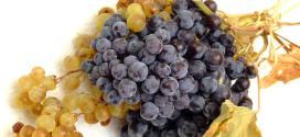 Perché mangiare, bere e utilizzare l'uva?