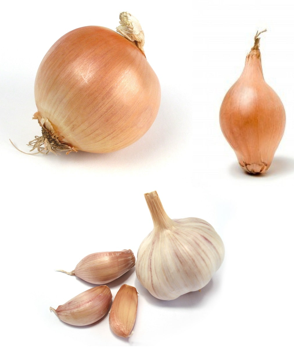 Cipolla scalogno e aglio for Quando si pianta l aglio