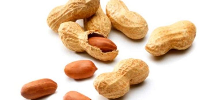 Arachide o nocciolina amaericana propriet e calorie for Pianta noccioline