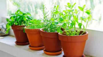 erbe-aromatiche sul balcone