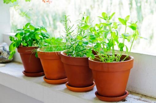 Le erbe aromatiche da coltivare in vaso sul balcone - Cucina sul balcone ...