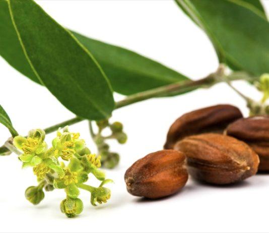 olio di jojoba oil