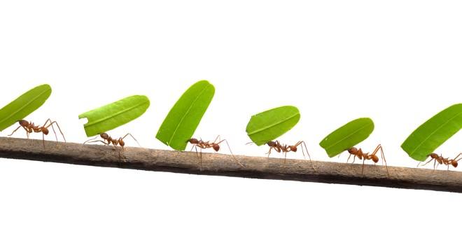 Come difendersi dalle formiche con rimedi naturali - Come allontanare le formiche da casa ...