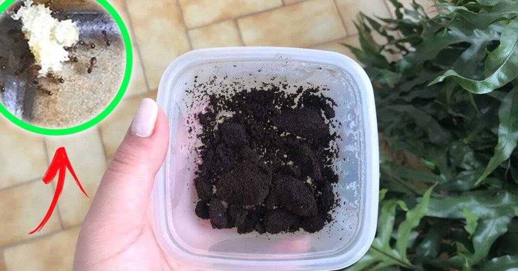 rimedi-naturali-formiche