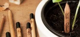 La pianta matita Sprout