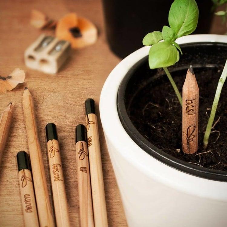 sprout matita pianta