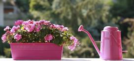 Le piante per tenere lontane le zanzare in modo naturale