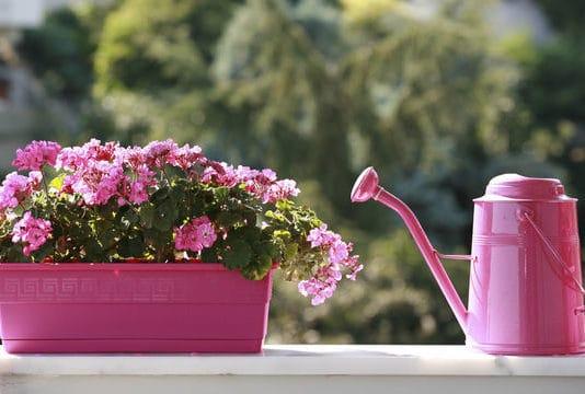 piante antizanzare balcone