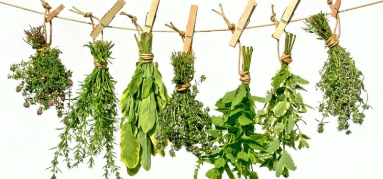 conservare erbe aromatiche secche
