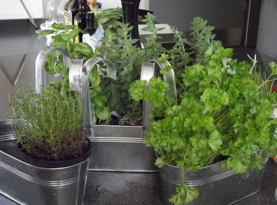 conservare erbe aromatiche