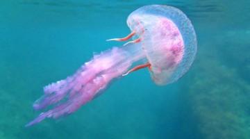 puntura morso medusa rimedipuntura morso medusa rimedi