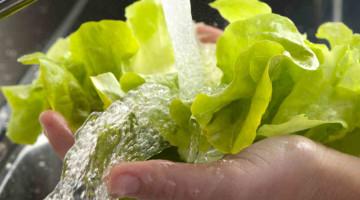 lavare insalata