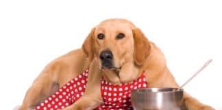 cibo cane
