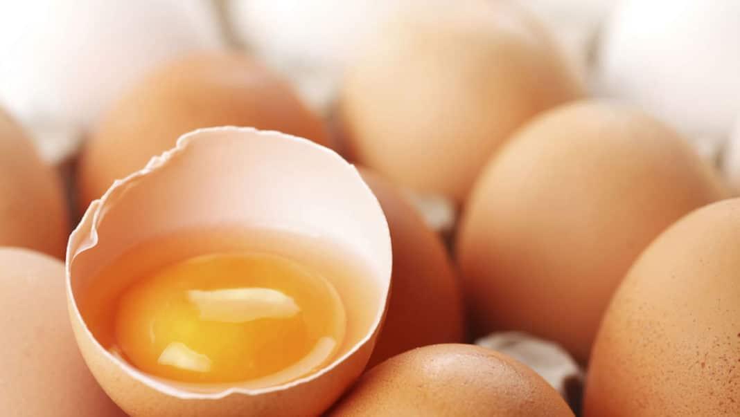 guscio uova