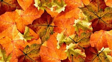 foglie-cadute-autunno-riutilizzare