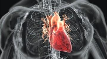 cuore-fibrillazione-atriale