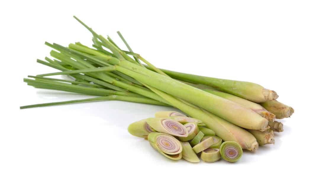 lemongrass citronella usi benefici