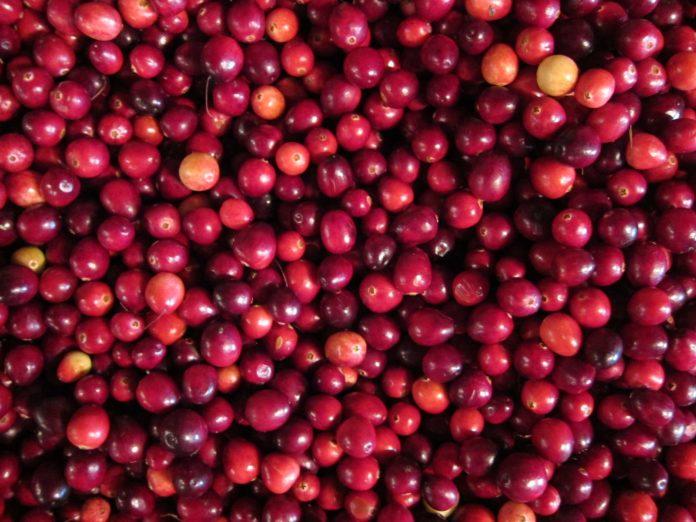 mirtillo-rosso-benefici