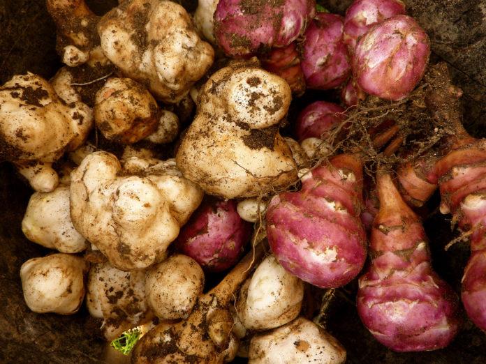 tuberi-cucina-povera-dieta