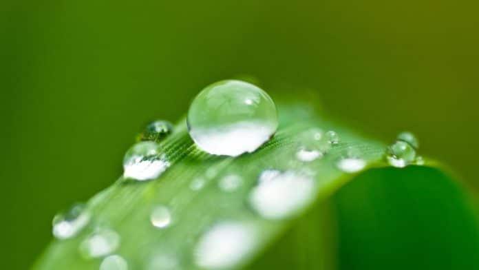 acqua di piante