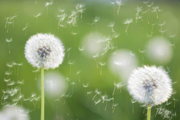 allergia polline