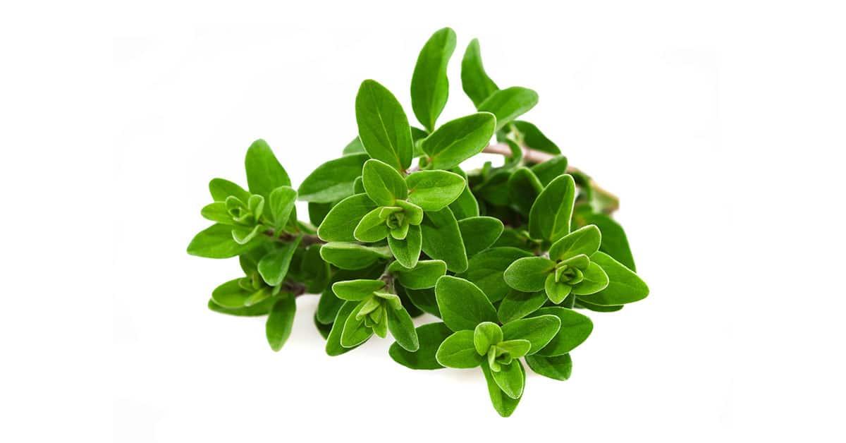Le erbe aromatiche da coltivare in vaso sul balcone for Erbe aromatiche in vaso