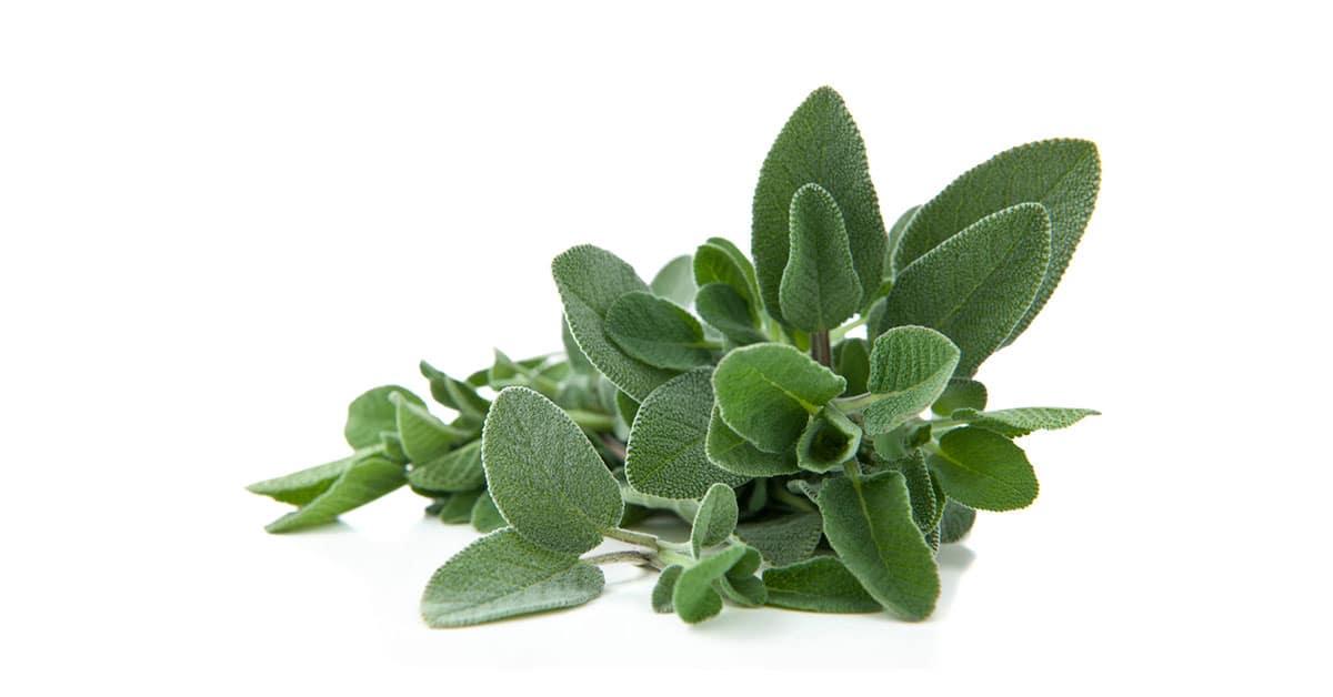 Le erbe aromatiche da coltivare in vaso sul balcone
