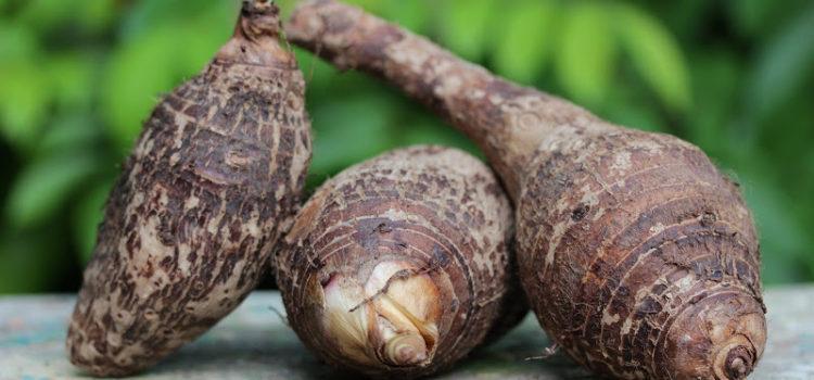 taro radice patata