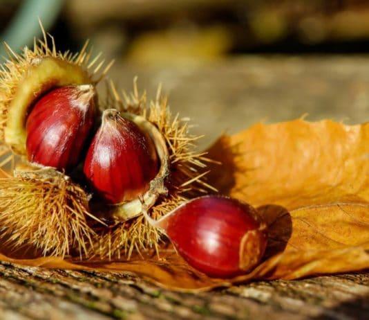 castagne rimedi naturali