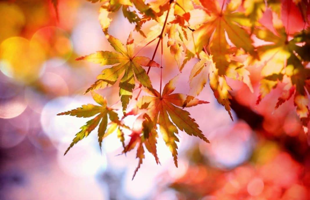 trattamenti di bellezza autunno