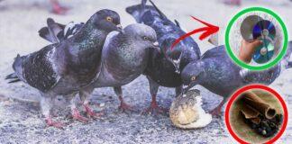 come-allontanare-piccioni