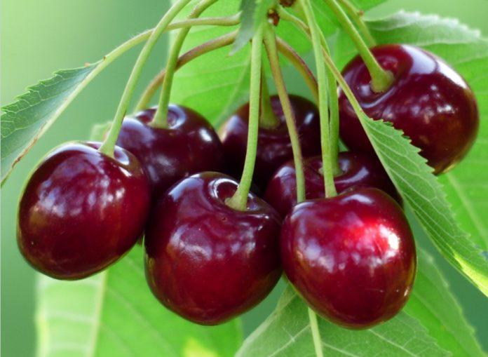 Peduncolo di ciliegia