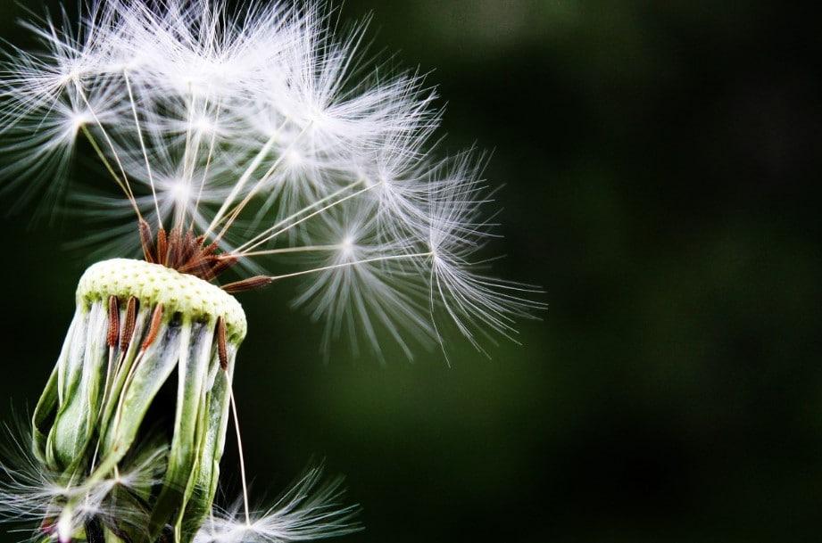 allergia stagionale