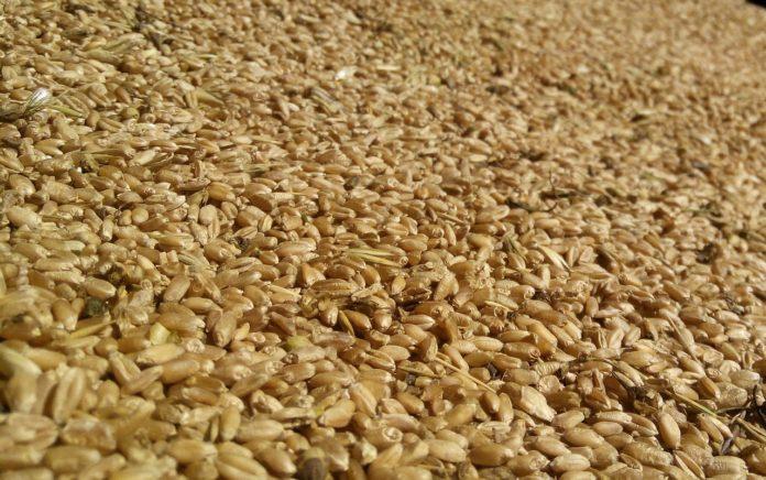 semi di miglio