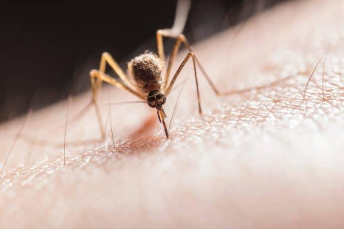 allarme-zanzara-coreana-nord-italia