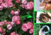 concime-naturale-giardino