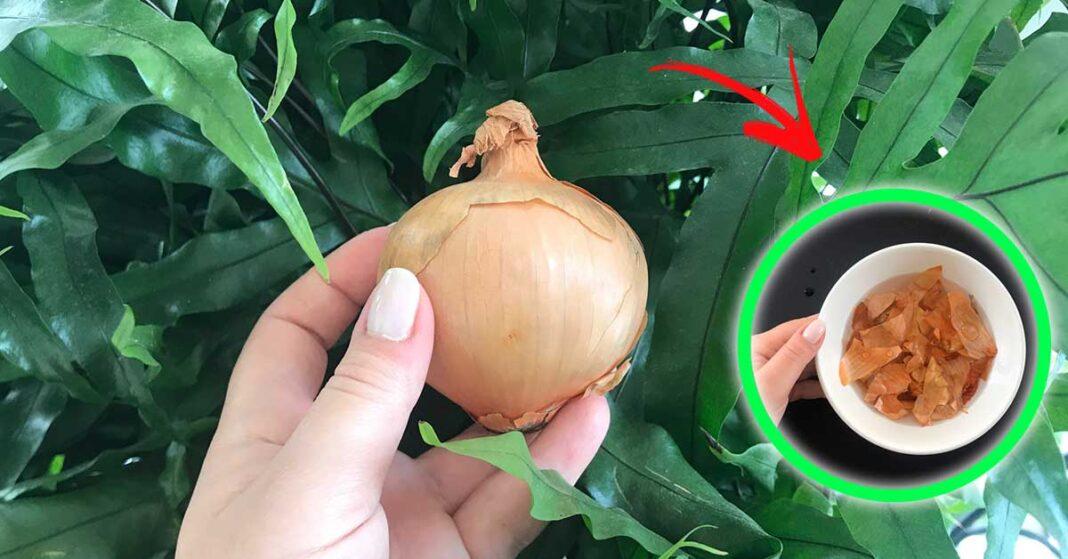 cipolla-giardino