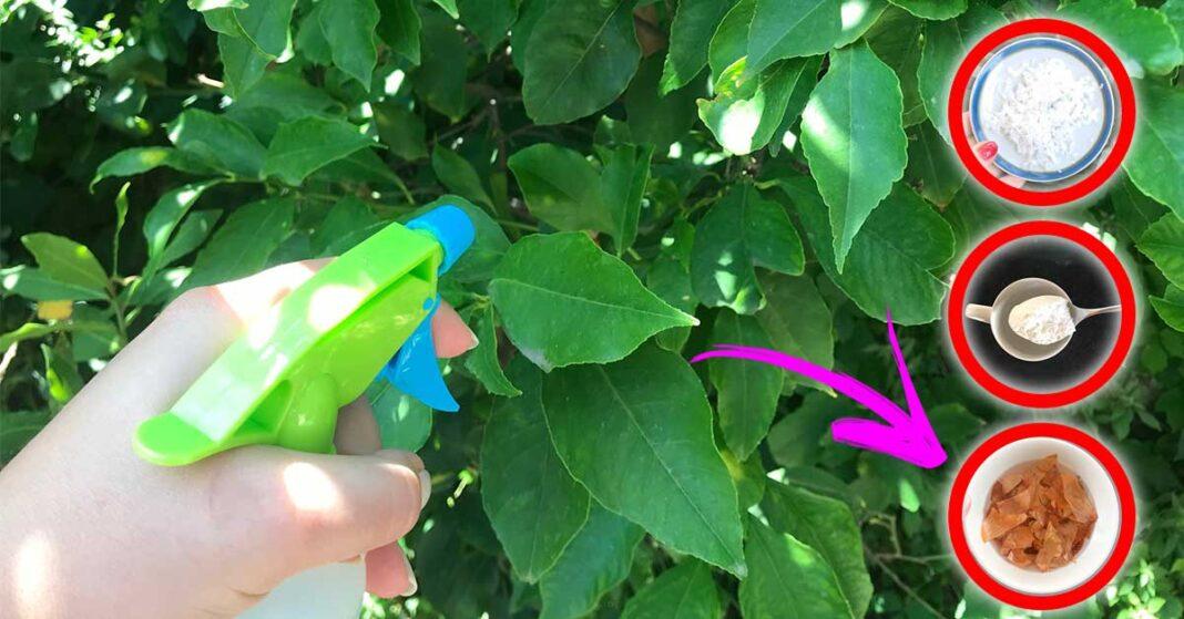come-togliere-pidocchi-piante