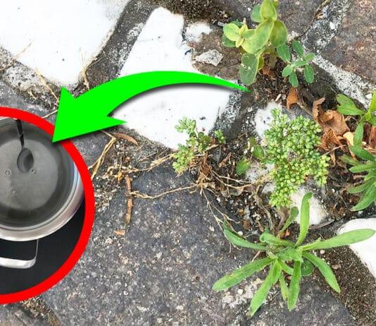 come-eliminare-erbacce