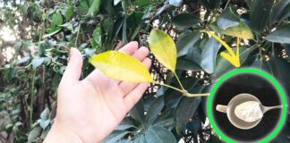 foglie-gialle-rimedi-naturali