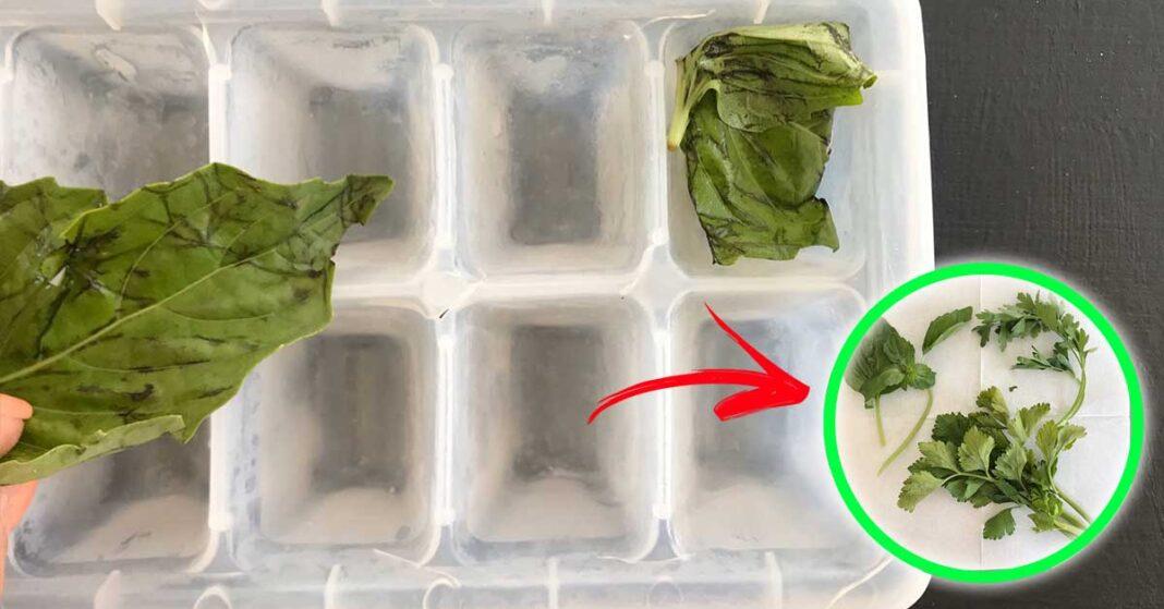 conservare-erbe-aromatiche-freezer