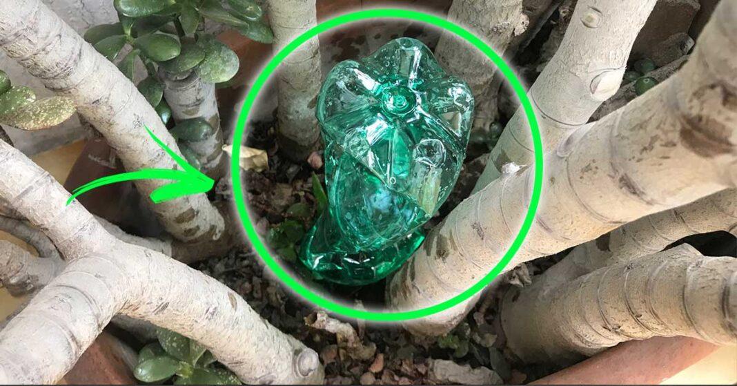 innaffiare-piante-bottiglia
