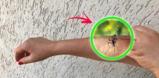 morsi-zanzare