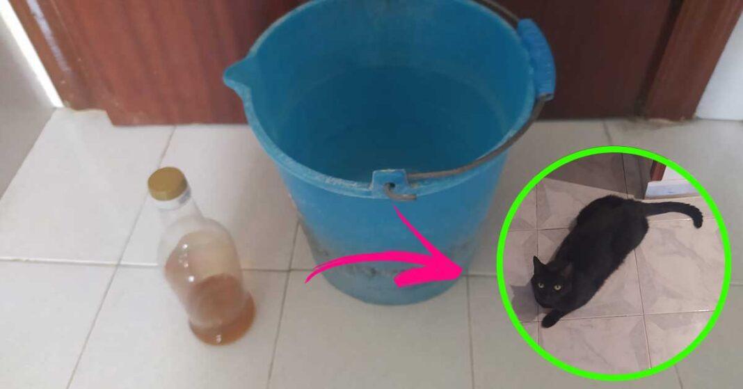 pavimento-gatto