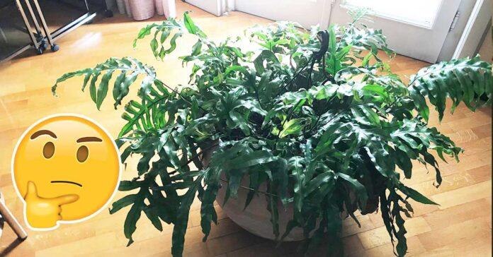 dove-mettere-le-piante