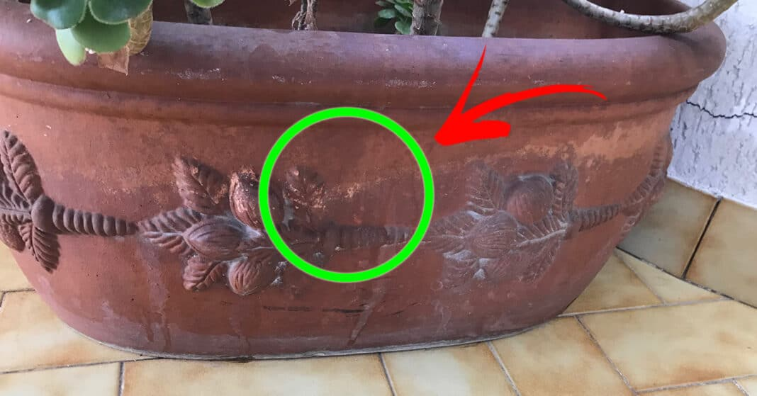 pulire-vaso-terracotta