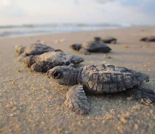boom-tartarughe-marine